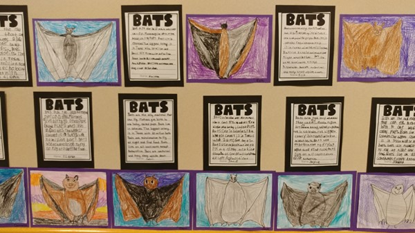 Bats
