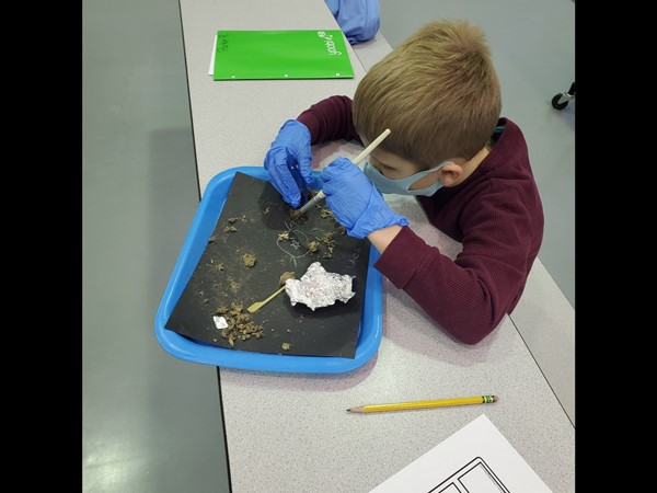 CCP Student Dissecting an Owl Pellet March 2021